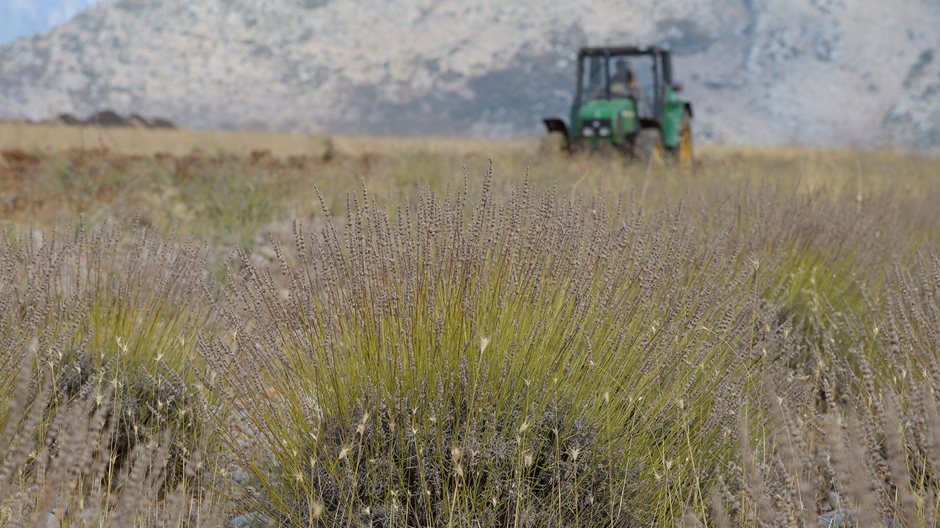 Albania's meagre soils and dry climate offer favourable conditions for medicinal and spice plants.