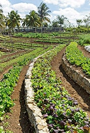 On Fernando Funes' farm vegetables are grown professionally on terraced fields.