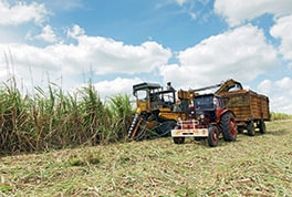 The machinery from the Soviet Union era rarely works reliably. The Cuban sugar cane industry is largely unproductive.